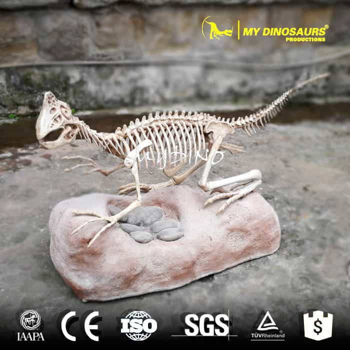 DS-130 Dinosaur Exhibition Oviraptor Skeleton With Dinosaurs Eggs Fossils  for Sale