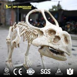 Protoceratops Fossil 1