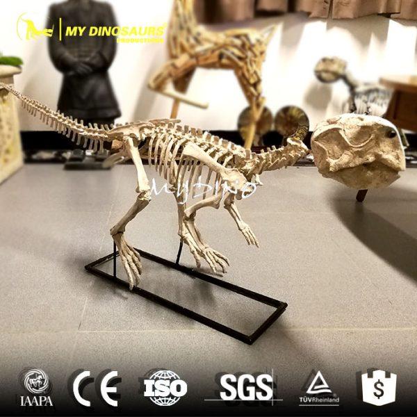 Psittacosaurus fossil