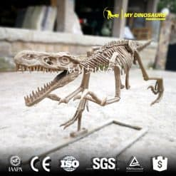 Raptor skeleton