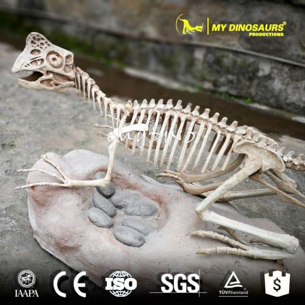 Skeleton fossil 1