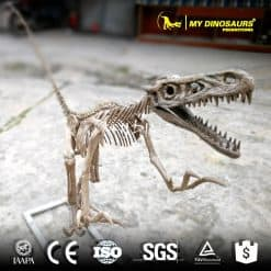 animated dinosaur skeleton 1