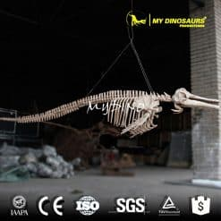 dolphin 3d skeleton