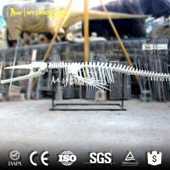 Whale skeleton 1