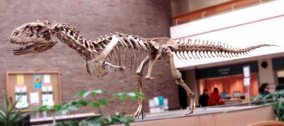 Dinosaur Skeletons banner