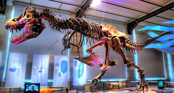 The Museum of Natural Sciences, Brussels, Belgium