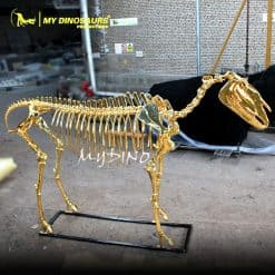 golden horse skeleton