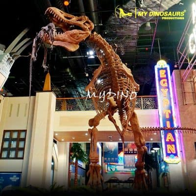 Fighting dinosaur skeletons