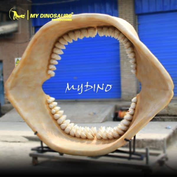 Megalodon Jaw Fossil 1