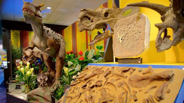 National Dinosaur Museum 118069
