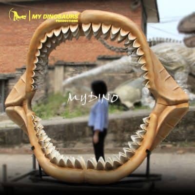 Megalodon shark jaw 1