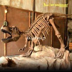 T REX skeleton 2