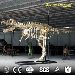 show case dinosaur skeleton