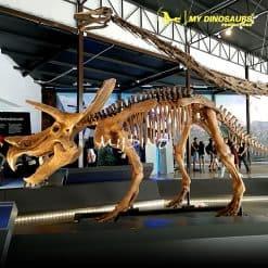 tricerotops skeleton 1