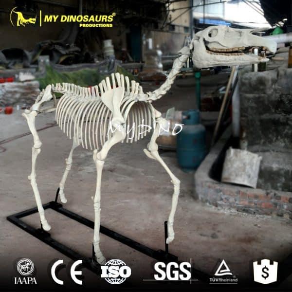 Hipparion Skeleton 1