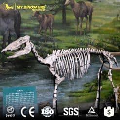 Neohipparion skeleton