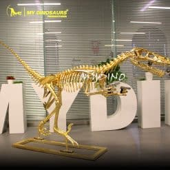 Goldish dinosaur skeleton