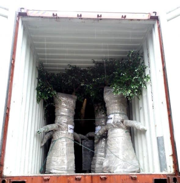 ANIMATRONIC PLANTS packing
