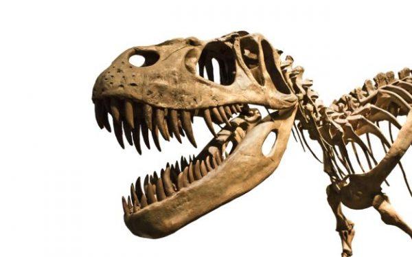 dinosauri 29032013 625shutterstock