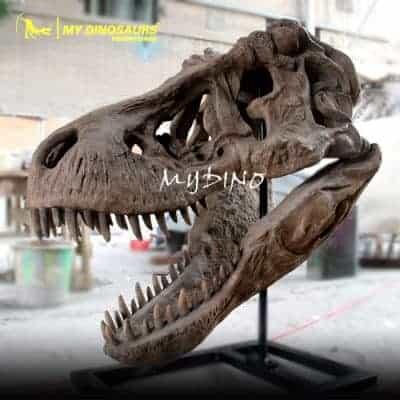 T REX Skull DS 062