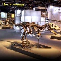 T REX skeleton 1