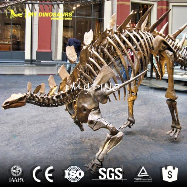 artificial stegosaurus skeleton