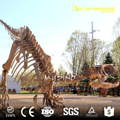 dinosaur fossil specimen