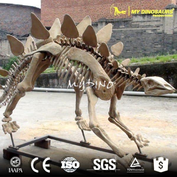 stegosaurus dinosaur fossil