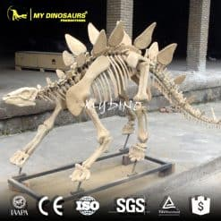 stegosaurus dinosaur fossils for sale