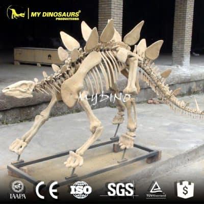 stegosaurus dinosaur fossils for sale