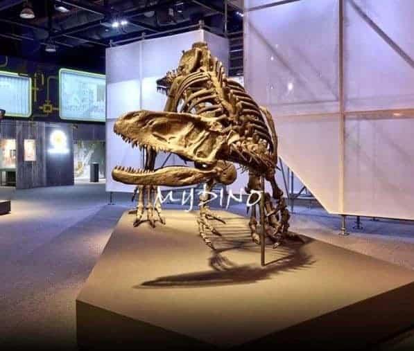 yangchuanosaurus skeleton 600x600