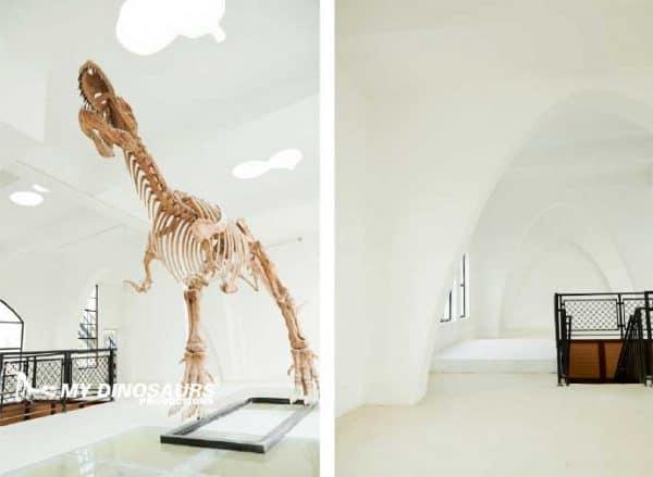 dinosaur skeleton props 1