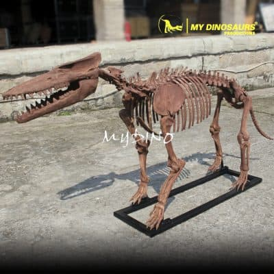 Customized Pakicetus Skeleton 1