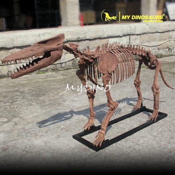 Customized Pakicetus Skeleton 1