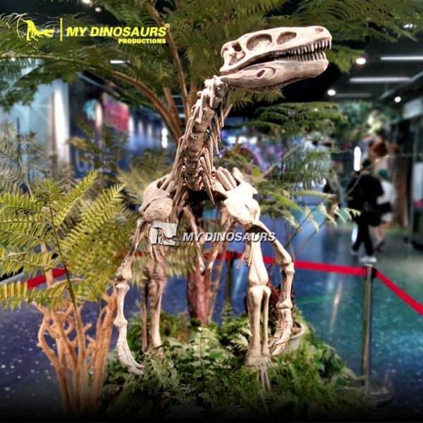 Herrerasaurus skeleton