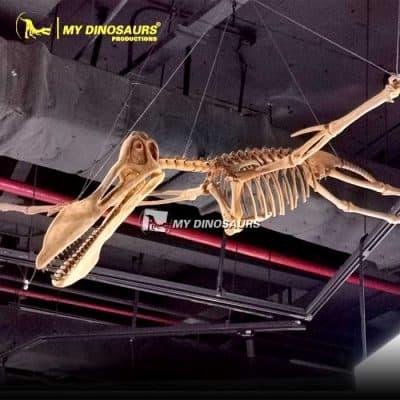 pterosaurs skeleton