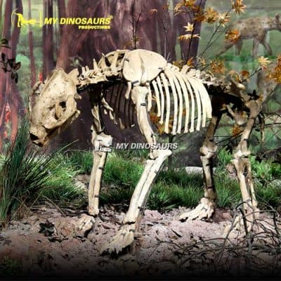 Giant Panda Skeleton