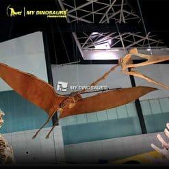 Quetzalcoatlus Skeleton