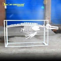 Customized dolphin skeleton 1