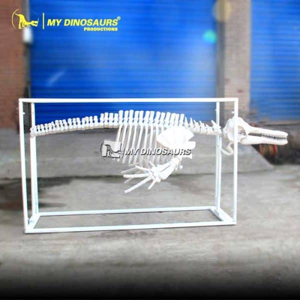 Customized dolphin skeleton 1
