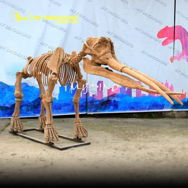 Gomphothere skeleton 1