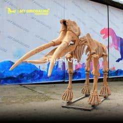 Prehistoric animal skeleton