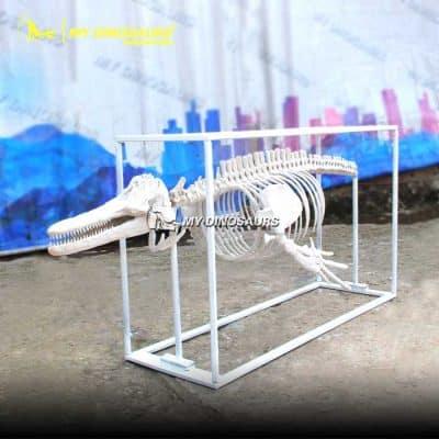 fiberglass dolphin skeleton 1