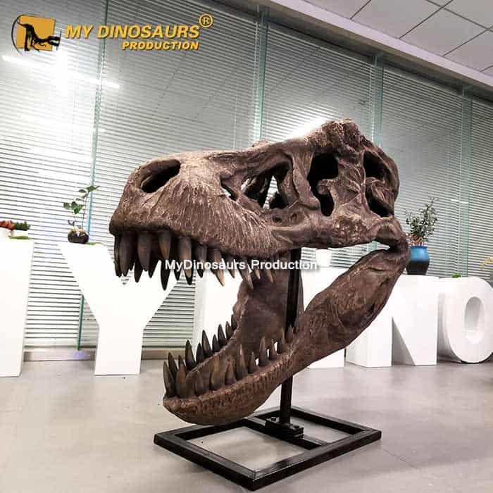 Life Size T REX Skull