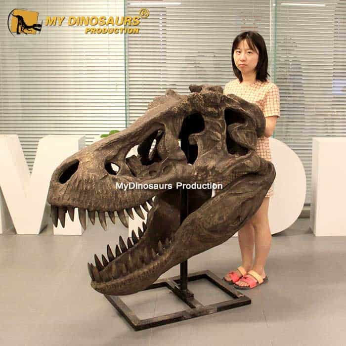 Ds 168 Tyrannosaurus Rex Skull Statue For Sale My Dinosaurs