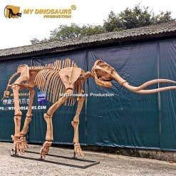 Woolly mammoth skeleton 1
