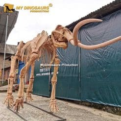 Woolly mammoth skeleton 4