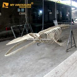 8m blue whale skeleton 2
