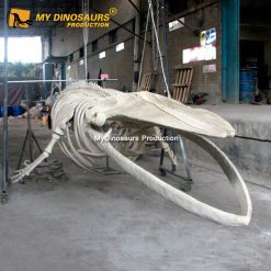 8m blue whale skeleton 4