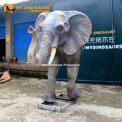 Elephant head 1
